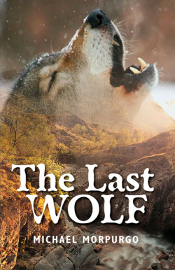 Rollercoasters: the Last Wolf