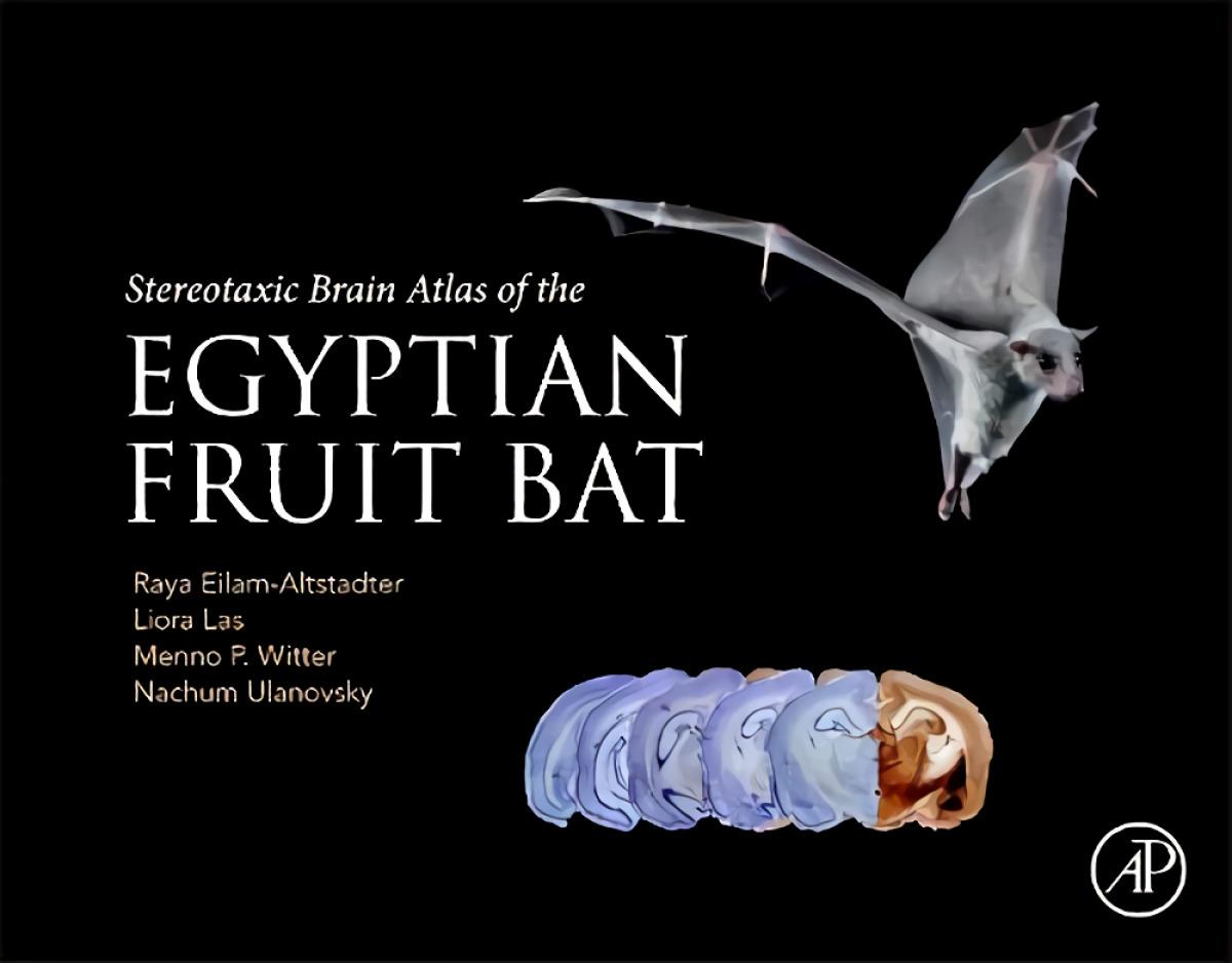 Stereotaxic Brain Atlas of the Egyptian Fruit Bat