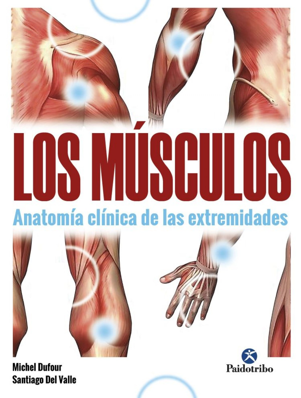 Músculos, Los. Anatomía clínica de las extremidades