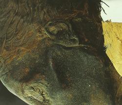 Momias reales.inmortalidad en antiguo egipto
