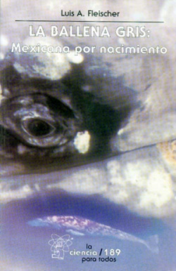 La ballena gris : mexicana por nacimiento