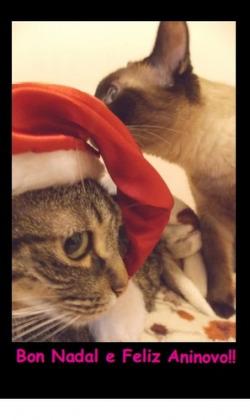 (Postal) Bon Nadal Gatiños